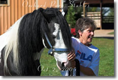 Ontario Breeders Production Sale's Barb Bowen with her American Sport Pony 'Private Eye'