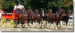 Ontario Breeders Production Sale's Jim and Steve MacKay driving a Six horse hitch
